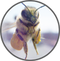 Beekeeping.isgood.ca logo
